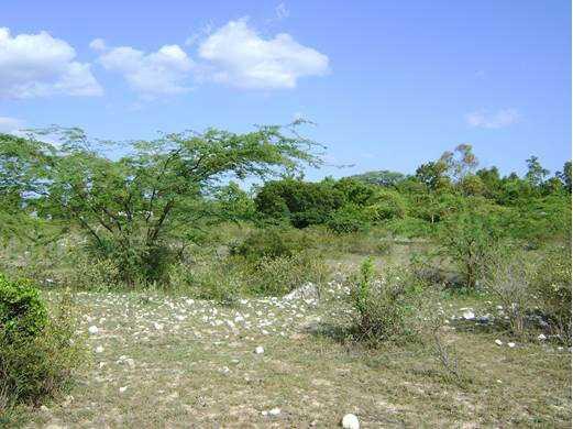 Amplio Terreno en Pedernales / Venta